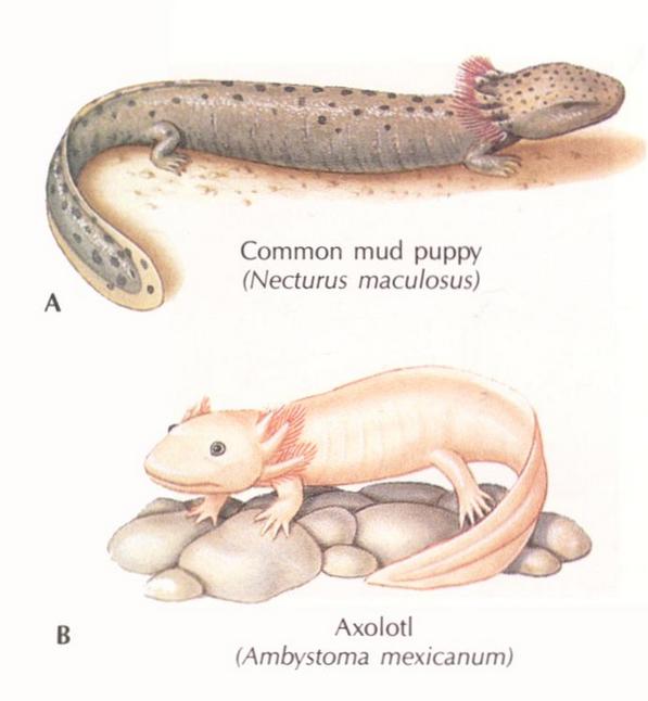 像蛇有四条腿但是白色的是什么