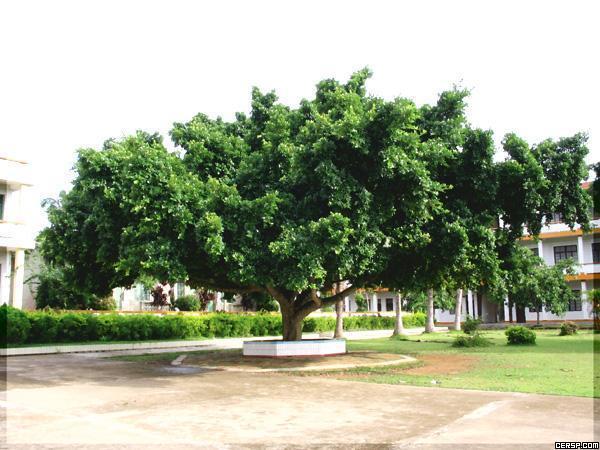 我们的校园里的大榕树一年四季各有不同的景色,真美啊!