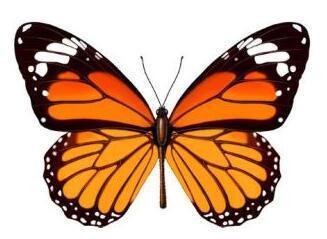 昆虫轴对称图形