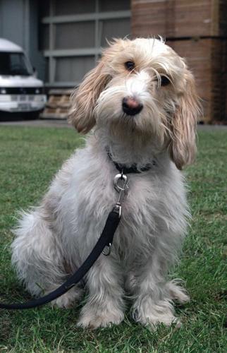 两只狗狗吃狗粮图片_平常大家都给自己的狗狗,吃什么牌子的狗粮_三个月狗狗吃多少狗粮