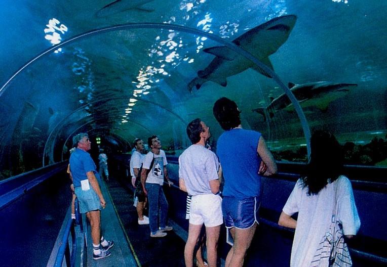 壁纸 海底 海底世界 海洋馆 水族馆 764_528