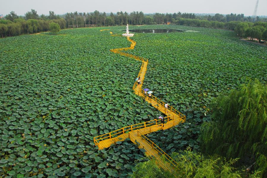 濒临渤海莱州湾,总面积10000亩,由寿光市机械林场于1998年投资建设.
