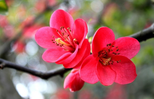 六瓣梅花的剪法步骤图