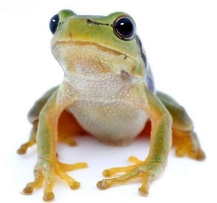 蛙的解剖手绘图