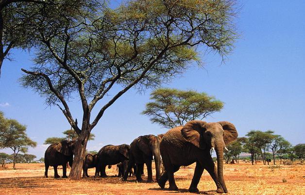 热带非洲赤道动物